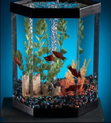 154389-384x425-fishaquarium